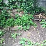 Tata!! Grün wird mehr.....dem Mulch hat sich wohl der Nachbar geholt....