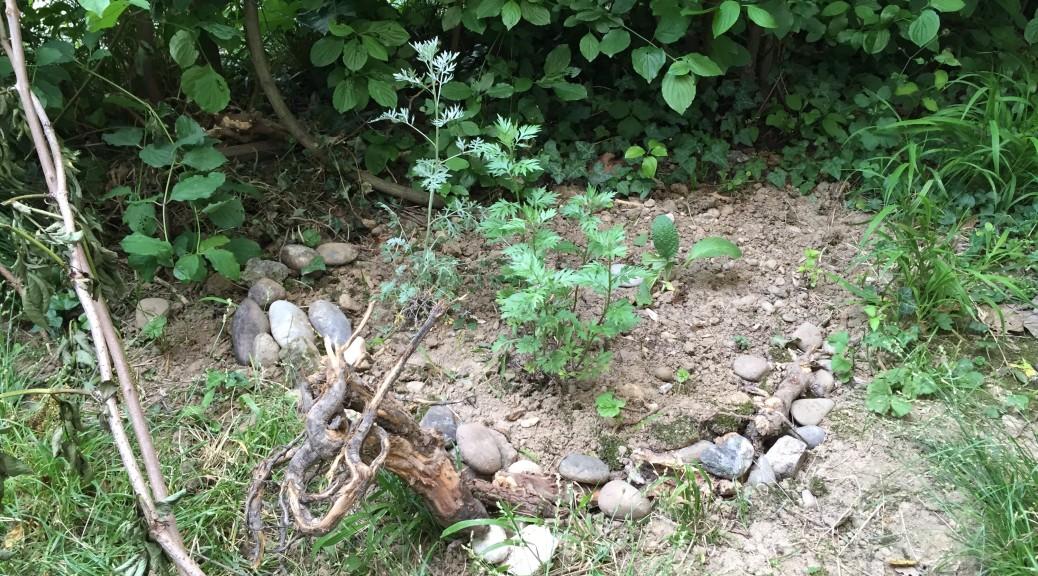 Artemisia Beet. Welche sind es?